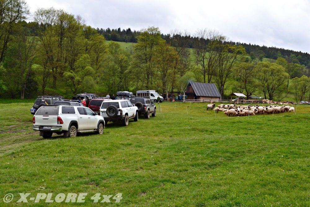 auta zaparkowane obok owiec