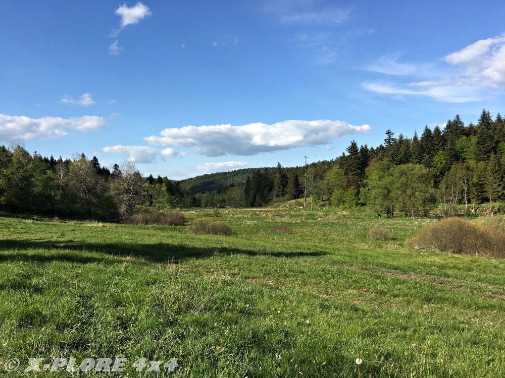 łąka otoczona lasem