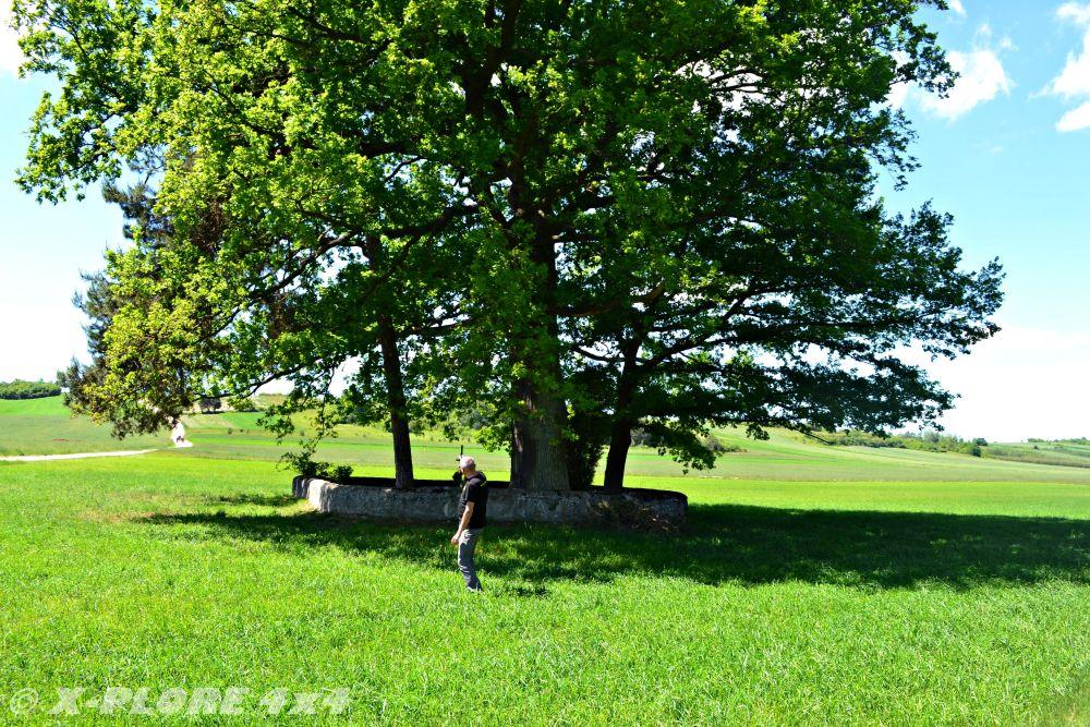 drzewo z murkiem na środku pola