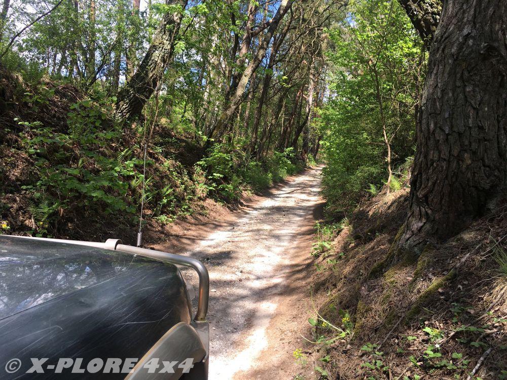ciasna droga polna między drzewami