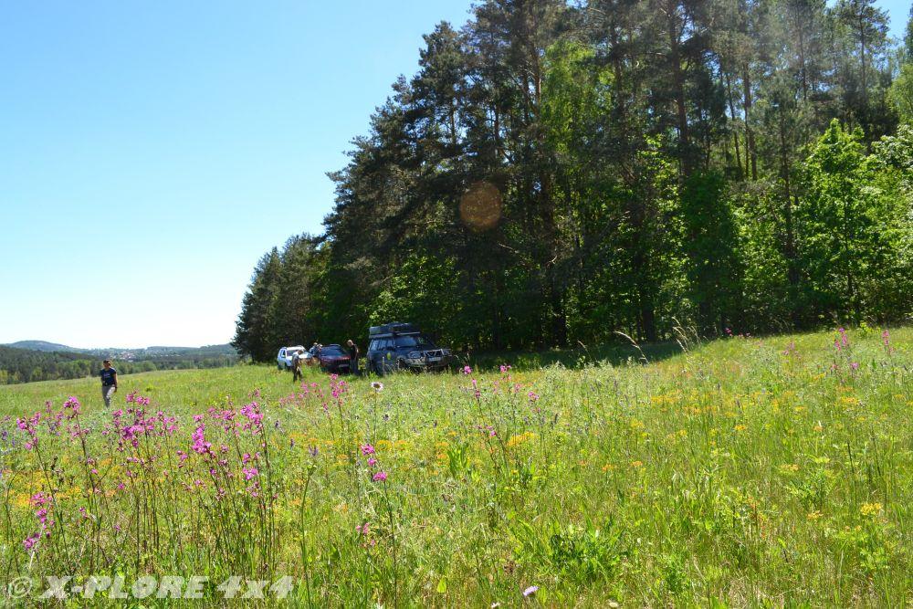 kwiaty z lasem i autami w tle