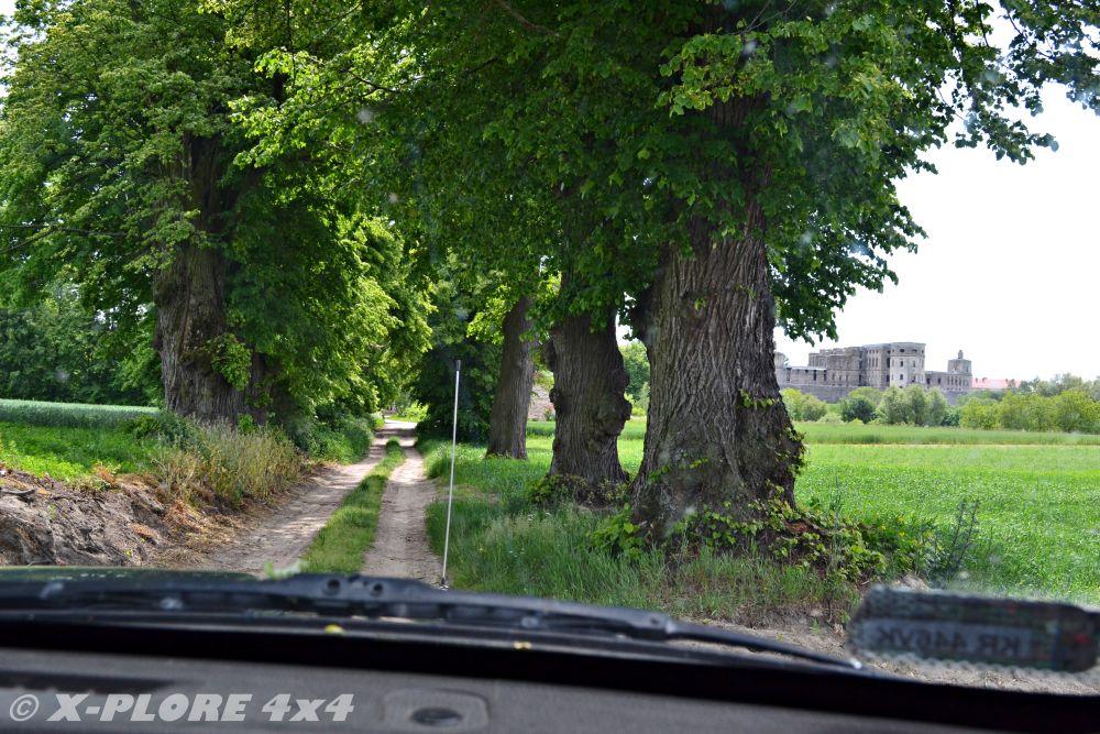 droga wśród drzew z ruinami w tle